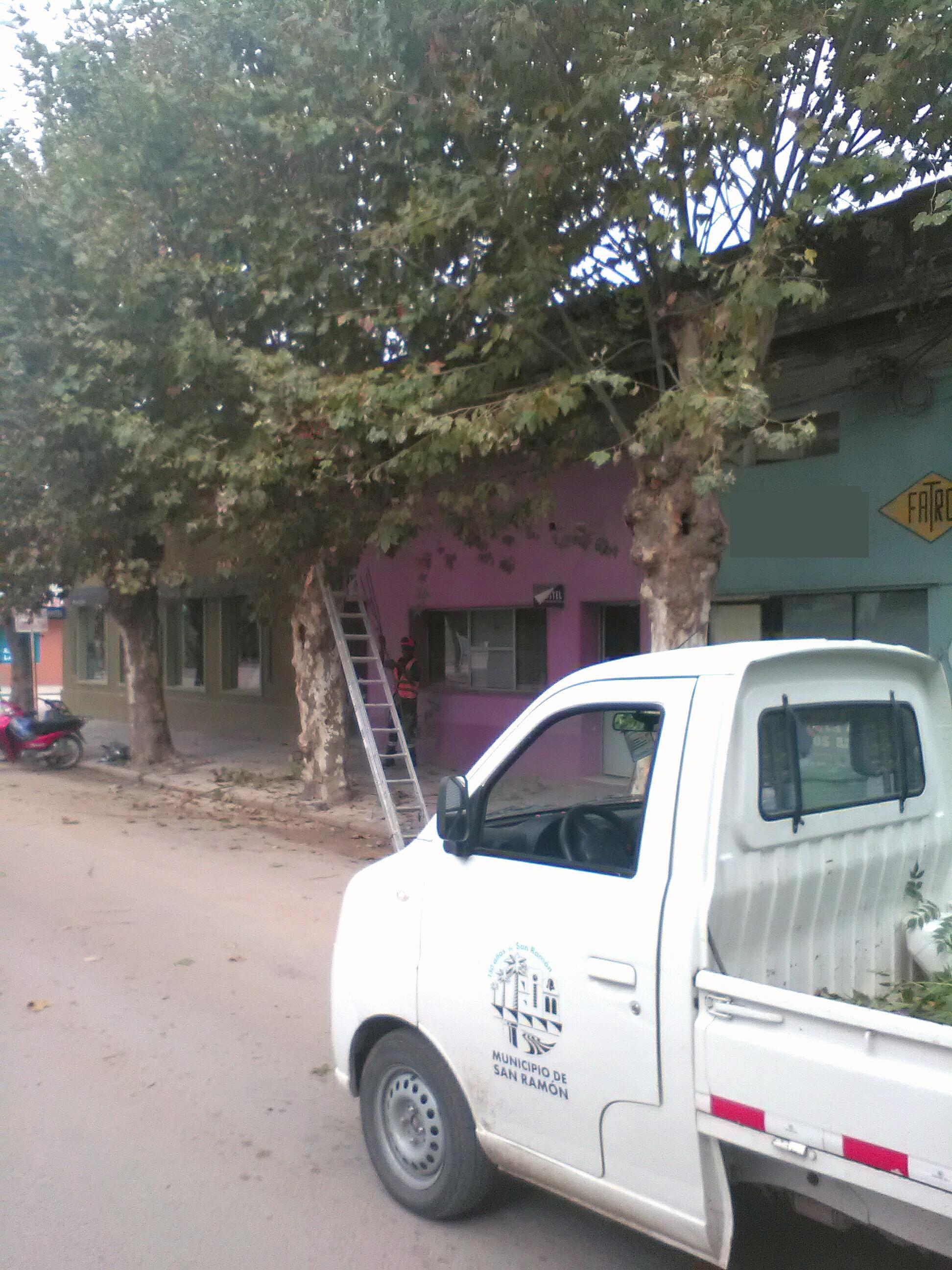 PODE DE ARBOLES EN LA CIUDAD DE SAN RAMON